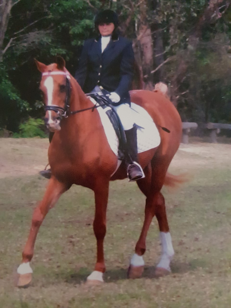 Kerrie competing on her horse Rebroff Clancella at a Sydney Dressage Comp.